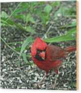 Cardinal In Springtime Wood Print