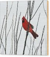 Cardinal In Willow  Wood Print