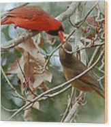 Cardinal Kisses Wood Print