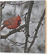 Cardinal Male 3666 Wood Print