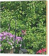 Cardinal Ready To Land Wood Print