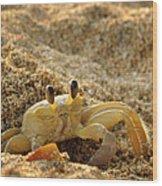 Caribbean Crab Wood Print