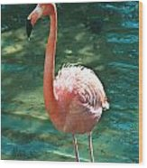 Caribbean Flamingo 2 Wood Print