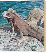 Caribbean Iguana Wood Print