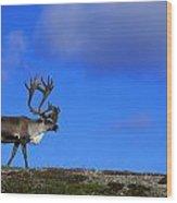 Caribou Walking On Hill Crest Wood Print