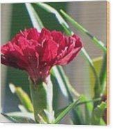 Carnation Named Hounsa Wood Print