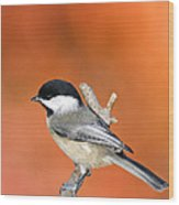 Carolina Chickadee - D007812 Wood Print