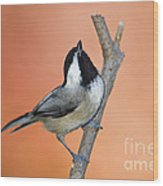 Carolina Chickadee - D007814 Wood Print