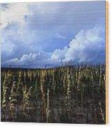Carolina Sea Oats Wood Print