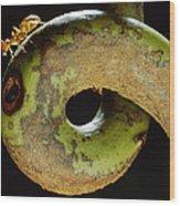 Carpenter Ant Camponotus Schmtzi Wood Print