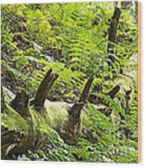 Carpet Of Ferns Wood Print