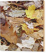 Carpet Of Leaves Wood Print