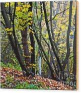 Cartoon Forest Wood Print