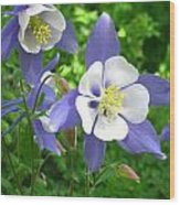 Cascade Columbine  Wood Print