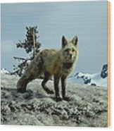 Cascade Red Fox 2 Wood Print