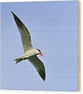 Caspian Tern Wood Print