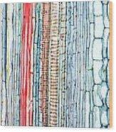 Castor Oil Stem, Light Micrograph Wood Print
