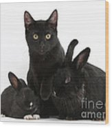 Cat And Rabbits Wood Print