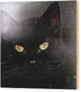 Cat Behind A Rain Spattered Window Wood Print