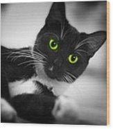 Cat Eyes Wood Print