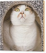 Cat From Cats House Wood Print