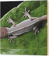 Cat Gecko Wood Print