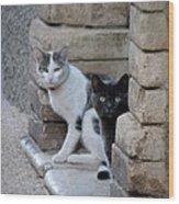 Cat Guardians Wood Print