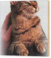 Cat Heaven Wood Print