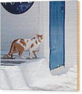 Cat In Mykonos Wood Print