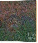 Cat In The Grasses Wood Print