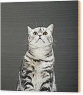 Cat Looking Up Wood Print