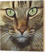 Cat Named Hooch Wood Print