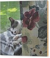 Cat Nap Curtain Wood Print