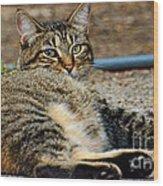 Cat Nap Interuption Wood Print
