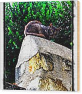Cat On Medieval Wall Wood Print