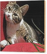 Cat On Red Wood Print