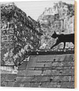Cat On Slate Roof Wood Print