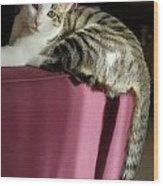 Cat On Sofa Wood Print