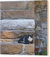 Cat On Stairs Wood Print