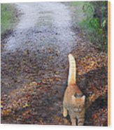 Cat On The Road Again Wood Print
