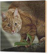 Cat Out On A Limb Wood Print