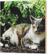 Cat Relaxing In Garden Wood Print