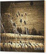 Cat Tails And Hay Rolls Wood Print