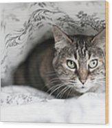 Cat Under In Blankets Wood Print