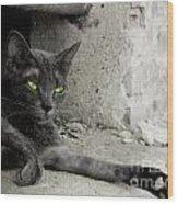 cat Wood Print by Zuzanna Nasidlak