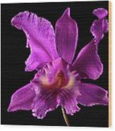 Catalea Orchid Wood Print