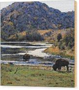 Catalina Buffalo  SOLD Wood Print