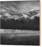 Cataloochee Elk Grazing The Fields Wood Print