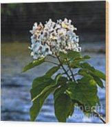 Catalpa Beauty Wood Print
