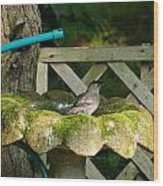 Catbird Shower Wood Print